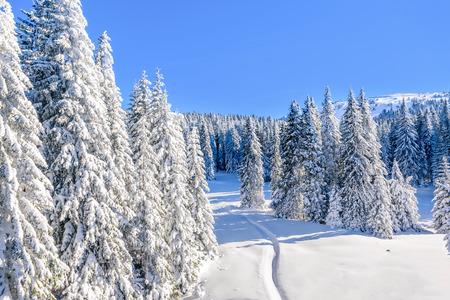 serbia landscape: Ski slope landscape on Kopaonik, Serbia