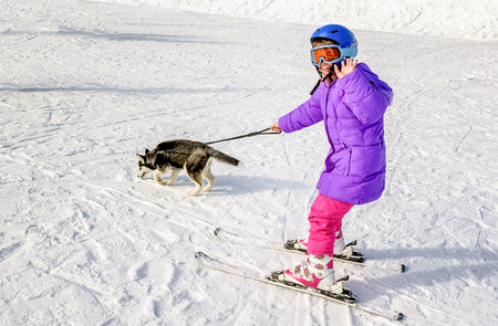 dragging: Husky puppy dragging little girl on the snow skiing