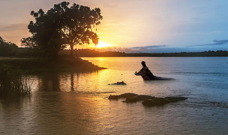 Hippopotamus  in the Nile river at sunrise at the Murchison Falls National Park in Uganda, Africa