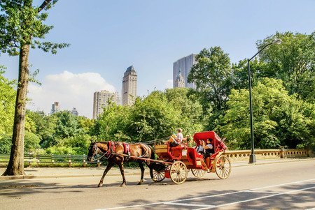 northeastern: Horse drawn carriege in Central Park, New York City
