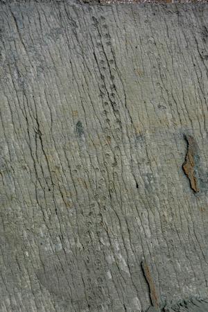 Footprints at Dinosaur park in Sucre, Bolivia Stock Photo - 83881035