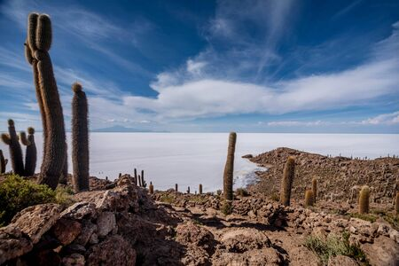 island: Incahuasi island ( Cactus Island) lokated at Salar de Uyuni the largest salt flat area in Bolivia Stock Photo