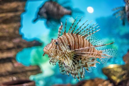 Underwater World red lionfish, Asia
