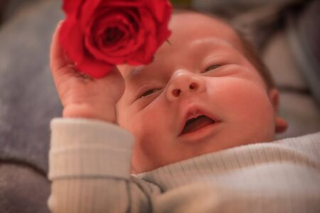 Close up of a newborn baby boy holding a rose in his hand and  laying in the bed