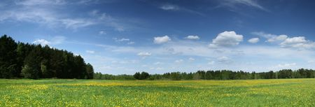panorama of meadows with dandelions