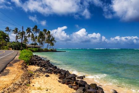 Road near the ocean and palm trees at Kualoa, Oahu, Hawaii