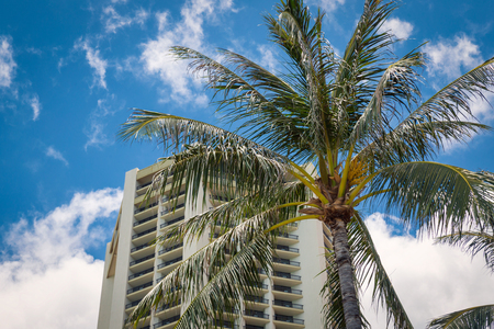 Palm tree and hotel building with blue sky background on Oahu island, Hawaii