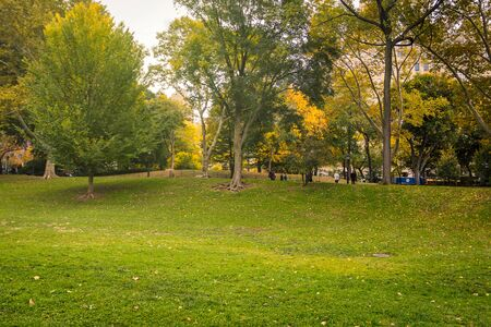 Green lawn in Central Park in fall season, New York Banco de Imagens