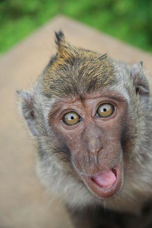 Happy monkey photo