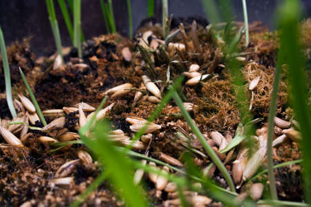 the ground seeds and seedlings Stock Photo