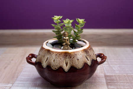the statue of Buddha and a succulent in a ceramic pot on a background of purple walls. Stock Photo