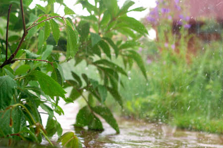 beautiful blurred summer background with greens and raindrops Banco de Imagens