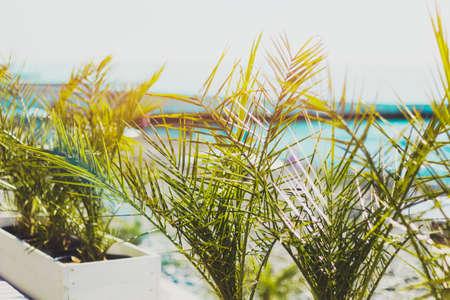 little palm trees in the pota summer sunny toned Reklamní fotografie