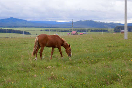 red horse grazing on the field