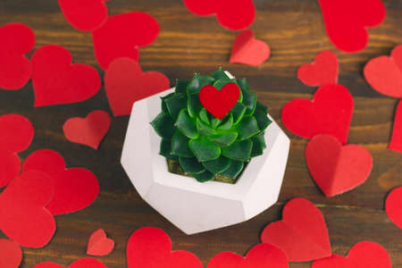 top view succulent in concrete pot on a wooden background