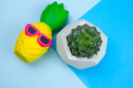 top viewsquishy pineapple toy and succulent in concrete pot on a blue background
