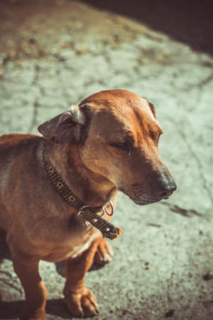 portrait of a dog in brown tones