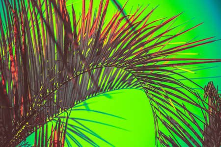 abstract tropical background with palm leaves tinted bright green