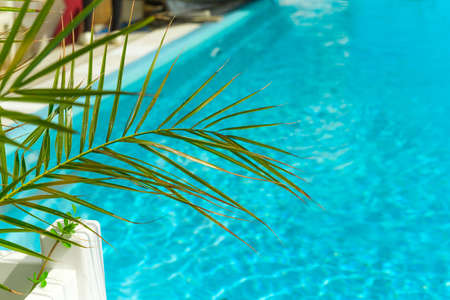 blurred summer vacation background   green palm leaf and turquoise water of the  swimming pool copy space