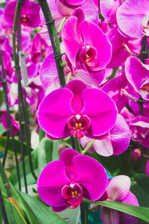 close up bright blooming Orchid