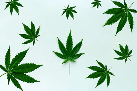 top view cannabis leaves on a paper background
