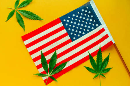 hemp leaves and  American flag top view yellow background