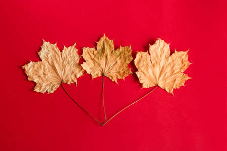 top view flat lay autumn composition with maple leaves