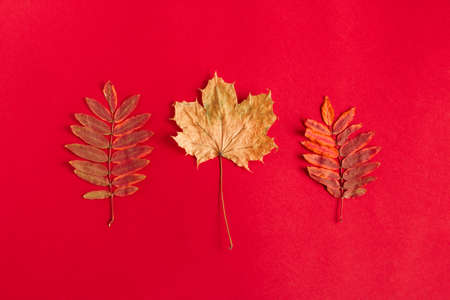 top view flat lay autumn composition with dried autumn leaves