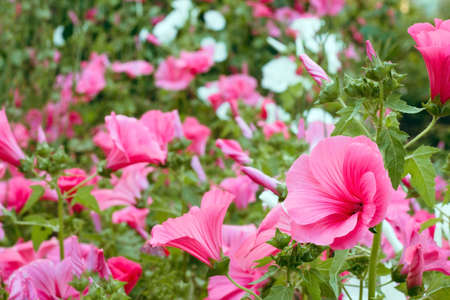 vibrant pink flowers in a garden abstract vibrant floral backdrop