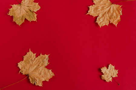 top view flat lay autumn composition with maple leaves copy space Banco de Imagens