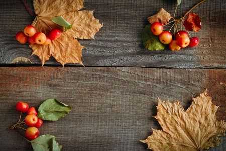 weathered wooden planks with empty space for text with maple leaves and little apples frame autumn backdrop Stock Photo