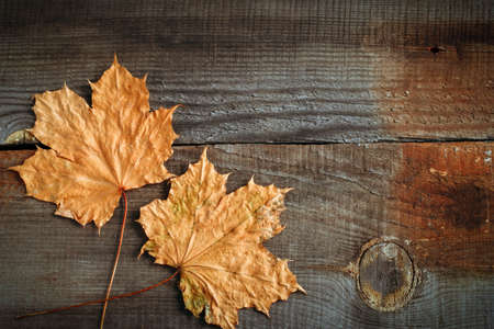 top view maple leaves on wooden boards autumn background