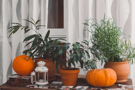 table with potted plants and cozy autumn natural interior decoration details with pumpkins