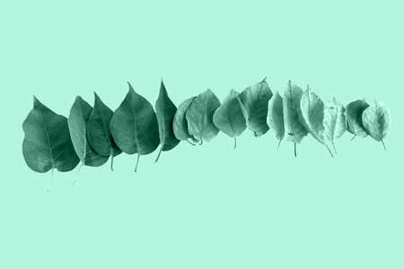 top view leaves row toned in trendy soft green colour