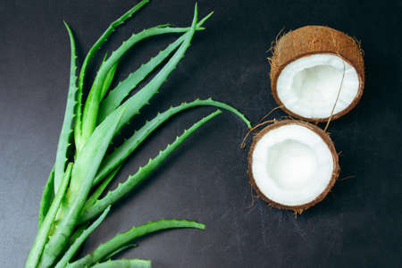 top view flat lay cracked coconut and green aloe vera plant leaves