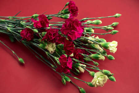 fresh carnation flowers on a vibrant red background