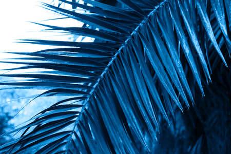 close up palm leaves texture monochrome dark  toned