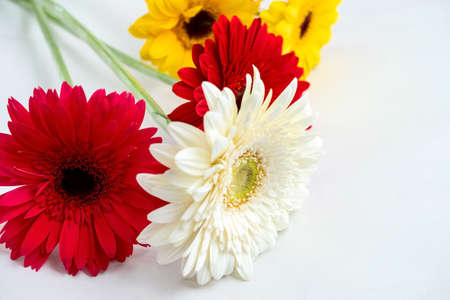 fresh flowers colorful gerberas on a white table