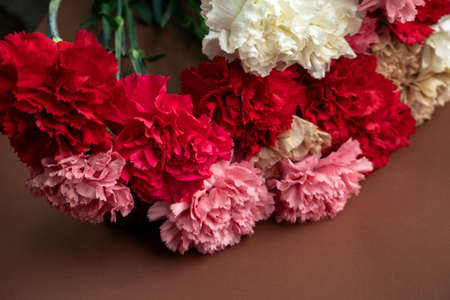close up fresh pink and red carnation flowers buds 写真素材