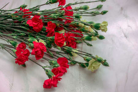 fresh carnation flowers on a vibrant marble background