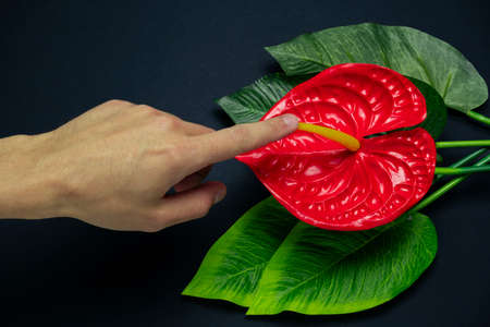 blurred male hand touches a red tropical flower on a black background, concept