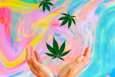 marijuana leaves fly down and fall into womens hands on apsychodelic multicolored blurred background 版權商用圖片