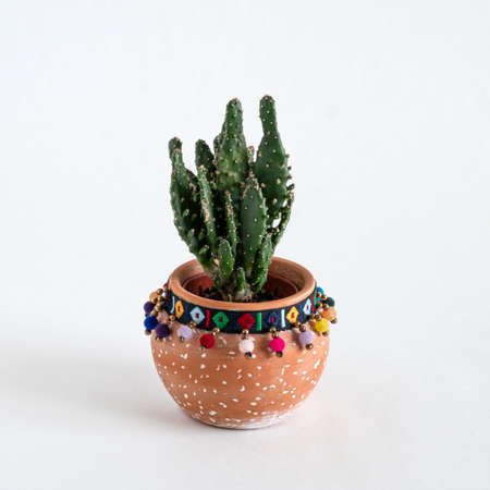 close up cactus in a ceramic pot on a white background