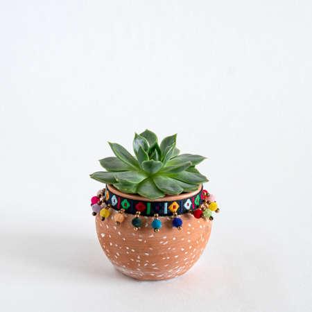 close up succulent in a ceramic pot on a white background