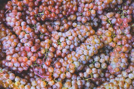 close up a lot of beautiful sweet multicolored grape berries, natural organic food backdrop 写真素材
