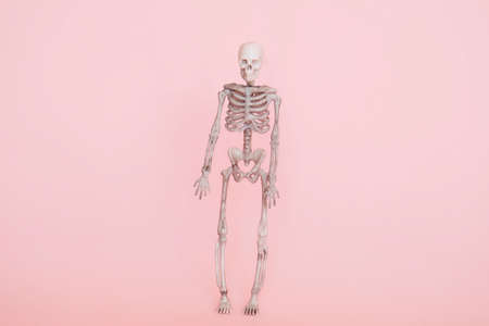human skeleton isolated on a soft pink background