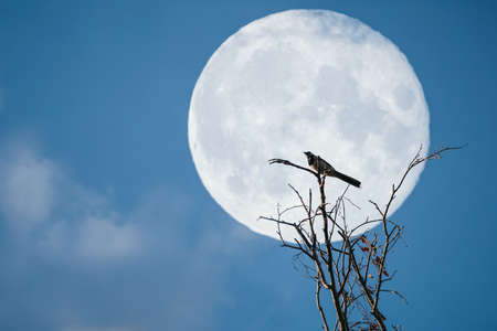 fantasy landscape with bird sitting on a tree against night sky with full super moon