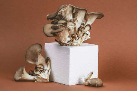 minimal trendy still life with oyster mushrooms on a foam cube on a beautiful brown background