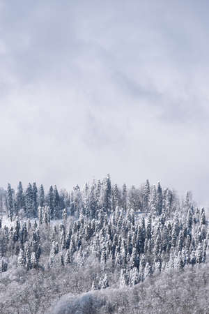 Vertical wallpaper with snow covered trees and fog Banco de Imagens