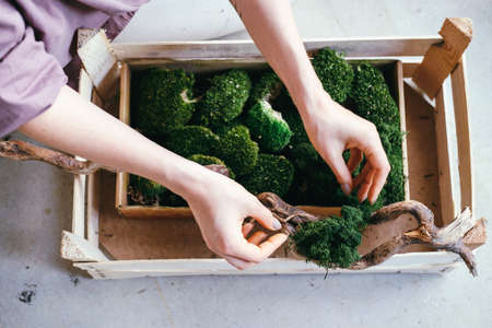 Top view a woman selects stabilized moss for vertical landscaping Banco de Imagens - 164980611